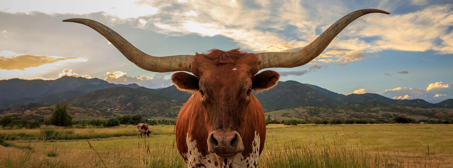 FeatImageCollection_1920x716_Texas